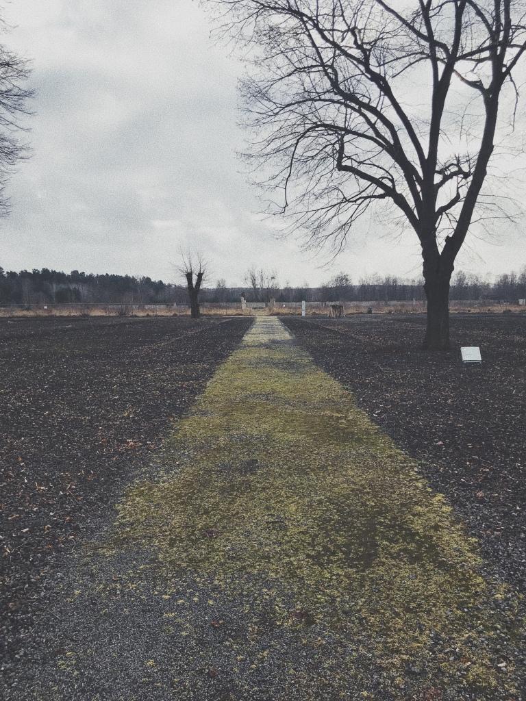 Straße mit Moss bewachsen, links steht ein Baum ohne Laub.