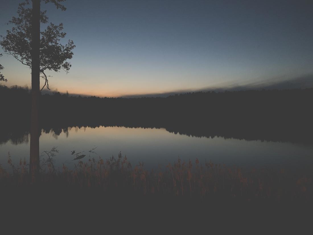 Sonnenuntergang über einem See, der von Wald umgeben ist. Im Vordergrund steht links ein einsamer Baum